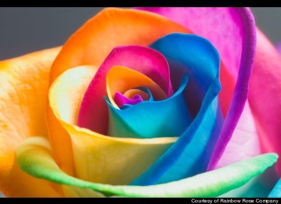 Color Flowers With Food Coloring Flowers And Food Coloring