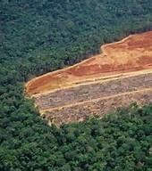 rain forest distruction